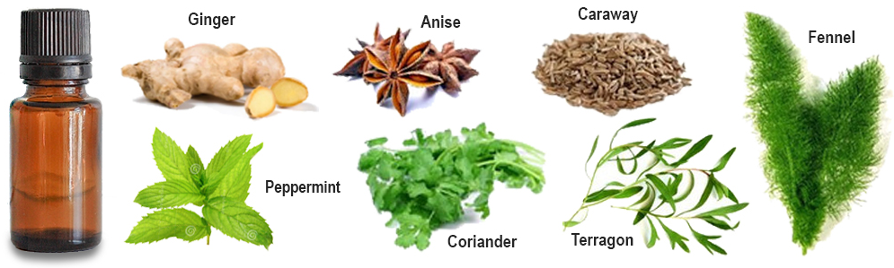 Image - A bottle of essential oil is pictured alongside some of the common ingredients; Ginger, Anise, Caraway, Peppermint, Coriander, Tarragon and Fennel.